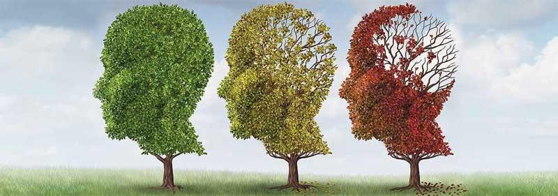 retiree-mind-fit